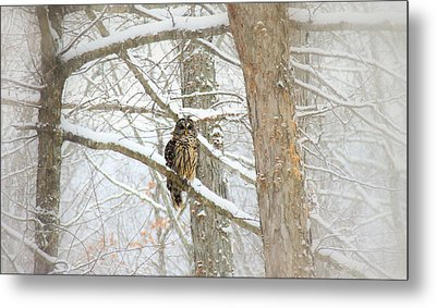 I Have My Eyes On You Metal Print