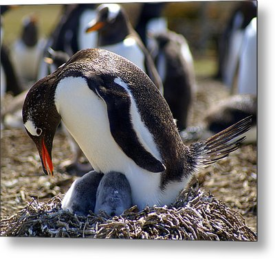 I Have Two - Penguins Metal Print by DerekTXFactor Creative