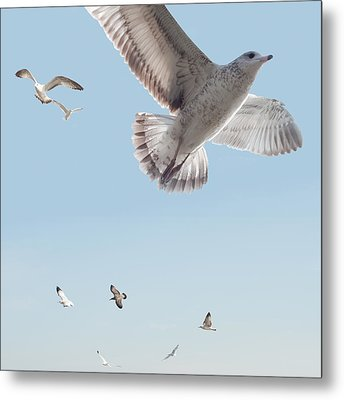 I Just Want To Fly Metal Print by Bill Cannon