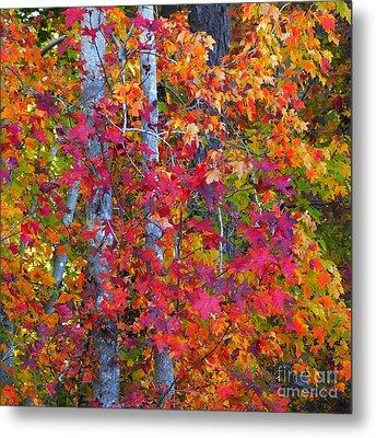 I Love Fall Metal Print by Scott Cameron