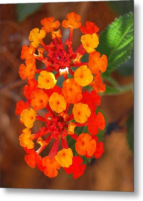 Metal Print featuring the photograph I Love Orange by Lew Davis