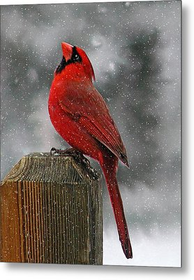 I Love Snow..... Metal Print by Judy  Johnson