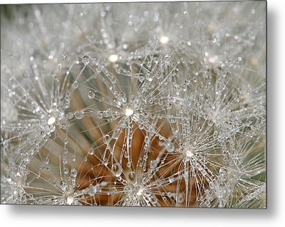 I Might've Gone To Seed But I Still Know How To Party Metal Print by Peggy Collins