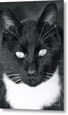 Metal Print featuring the photograph I See You by Barbara Dudley