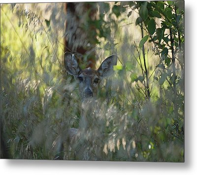I See You - Do You See Me?  Metal Print by HW Kateley