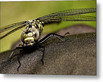 I See You Metal Print by Gary Wightman