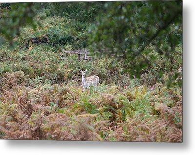 I See You Metal Print by Mark Severn