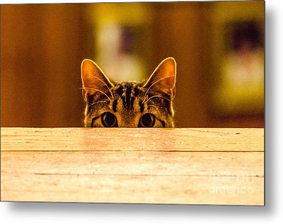 I See You Metal Print by Mike Ste Marie
