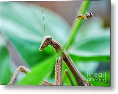 Metal Print featuring the photograph I See You by Thomas Woolworth