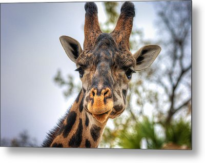I See You Metal Print by Tim Stanley