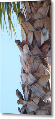 I See You Two Above Me Metal Print by Linda Brody
