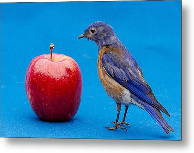 I Would Rather See The Doctor Metal Print by Jean Noren