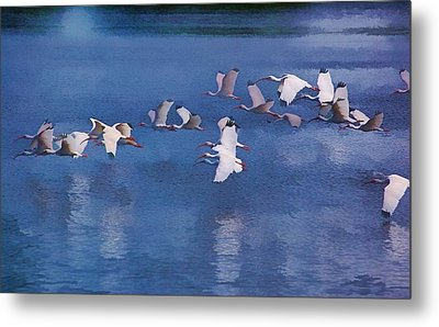 Metal Print featuring the photograph Ibis In Flight by Pamela Blizzard