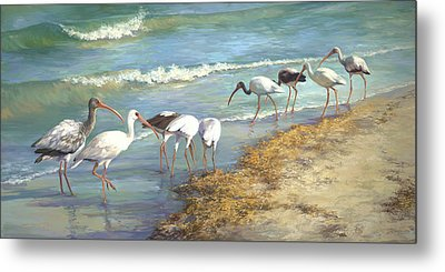Ibis On Marco Island Metal Print by Laurie Hein