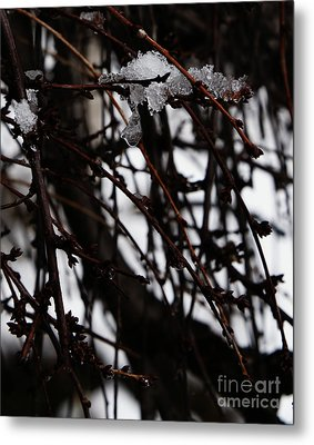 Ice 2 Metal Print by Linda Shafer