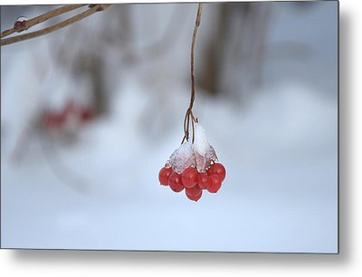 Ice Berries Metal Print by Sabine Edrissi