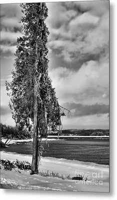 Ice Coated Tree Metal Print by Louise Heusinkveld