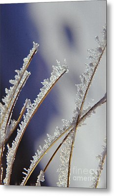 Metal Print featuring the photograph Ice Crystals On Fireweed Fairbanks  Alaska By Pat Hathaway 1969 by California Views Mr Pat Hathaway Archives