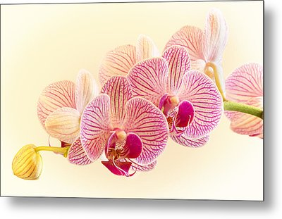 Ice Cube Orchid Metal Print