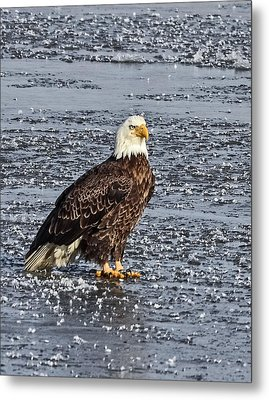 Ice Eagle Metal Print