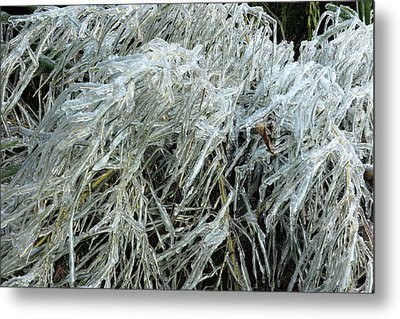Ice On Bamboo Leaves Metal Print
