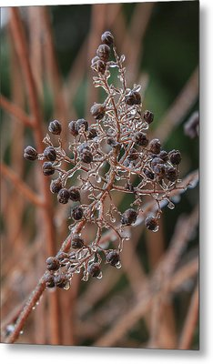 Metal Print featuring the photograph Ice On Berries by Patricia Schaefer
