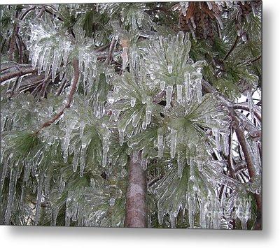 Ice Pine Metal Print by Deborah DeLaBarre
