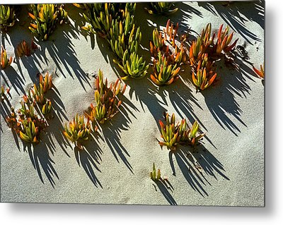 Ice Plant In Sand Metal Print