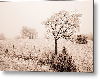 Ice Storm Metal Print by Brent Craft