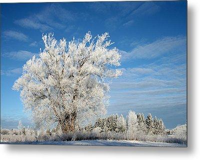 Ice Tree Metal Print by Brady D Hebert