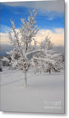 Ice Tree Metal Print by Fred Cerbini