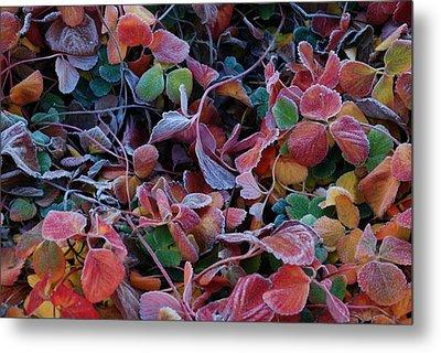 Iced Berries Metal Print