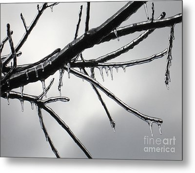 Metal Print featuring the photograph Iced Tree by Ann Horn