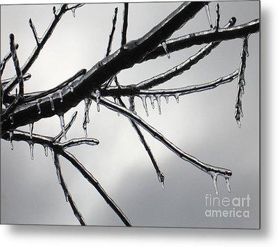 Iced Tree Metal Print by Ann Horn
