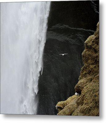 Iceland Seagull Flies Past Skogafoss Metal Print