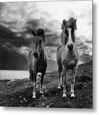Metal Print featuring the photograph Icelandic Horses by Frodi Brinks