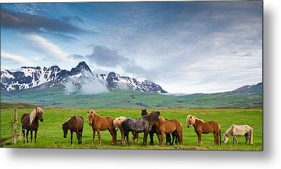 Icelandic Horses In Mountain Landscape In Iceland Metal Print