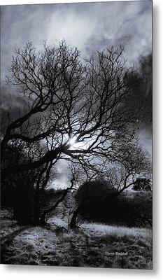 Ichabod's Pathway Metal Print by Donna Blackhall
