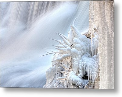 Icy Fingers Metal Print by Wanda Krack