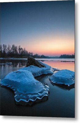 Icy Jellyfish Metal Print by Davorin Mance