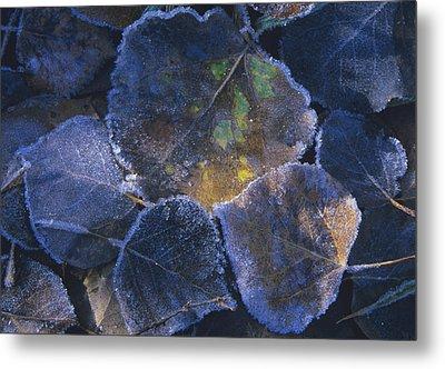 Icy Leaves Metal Print