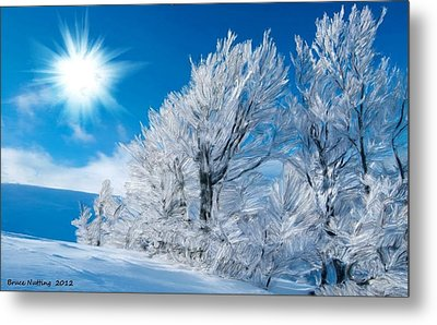 Icy Trees Metal Print by Bruce Nutting
