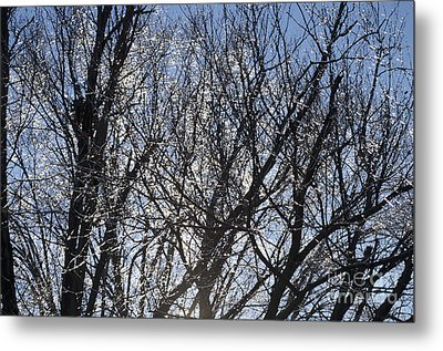 Icy Trees  Metal Print by Luther   Fine Art