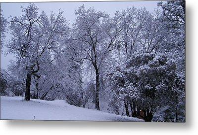Icy Trees Metal Print