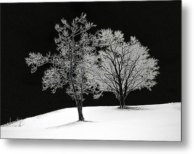 Icy Trees Metal Print by Wendell Thompson