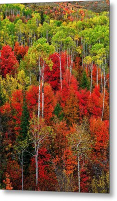 Idaho Autumn Metal Print by Greg Norrell
