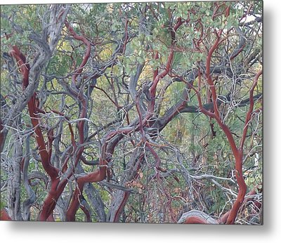 Idyllwild Red Tree Metal Print by Nora Boghossian