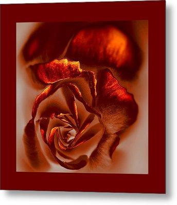 If A Rose Is A Rose Metal Print by Li   van Saathoff