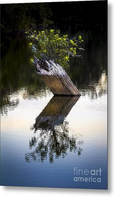 If There Is A Will There Is A Way Metal Print by Marvin Spates