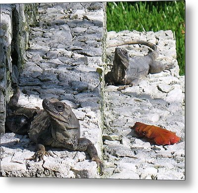 Iguana Bask In The Sun With You Metal Print by Patti Whitten